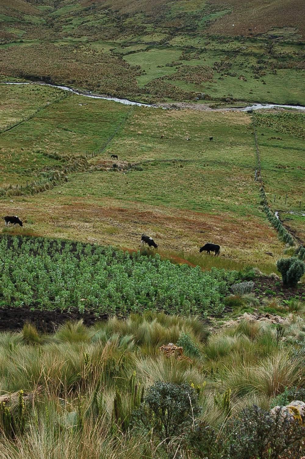 Risque et incertitude dans la gestion de lexploitation agricole.