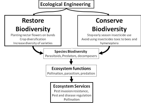 Figure 1. Ecological engineering is both to restore and to conserve biodiversity, ecological functions and ecosystem services