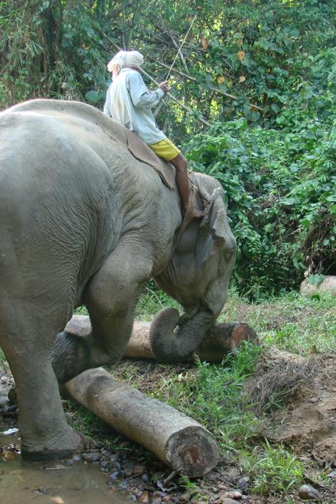 Rencontres éléphant Journal