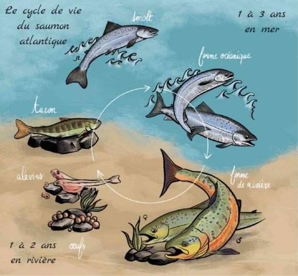 Gros poissons dans la mer datant